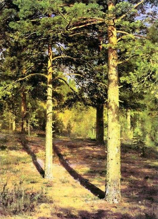 Description of the painting by Ivan Shishkin Pines illuminated by the sun
