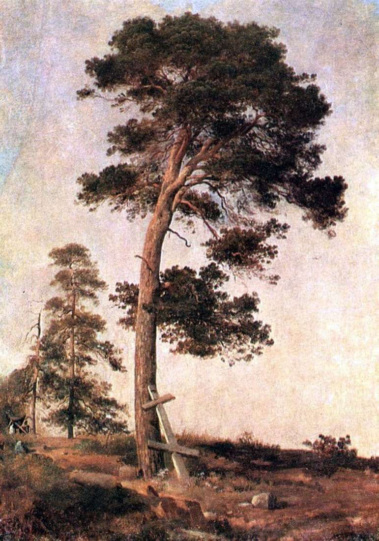 Description of the painting by Ivan Shishkin Pine on Valaam