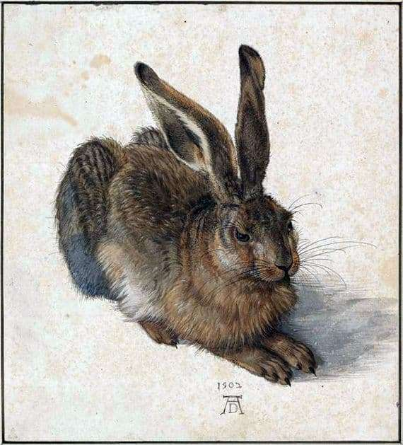Description of the painting by Albrecht Durer Hare