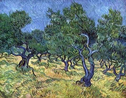 Description of the painting by Vincent Van Gogh Olive Grove