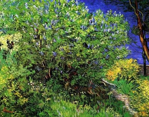 Description of the painting by Vincent Van Gogh Lilac bush