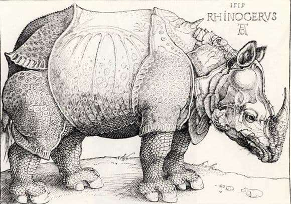 Description of the engraving of Albrecht Durer Rhino
