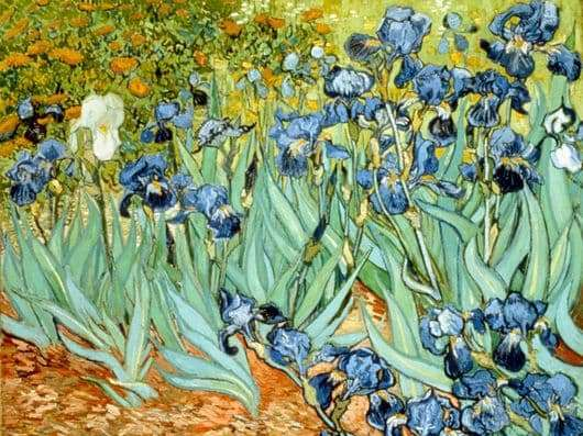 Description paintings by Vincent van Gogh Irises