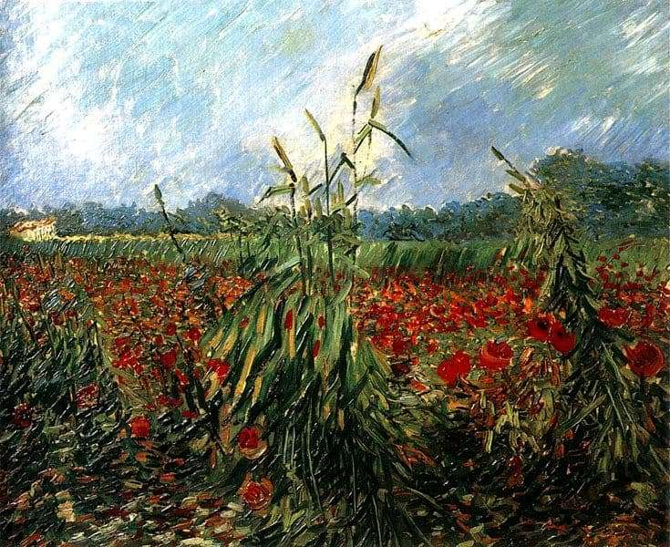 Description of the painting by Vincent Van Gogh Poppy Fields