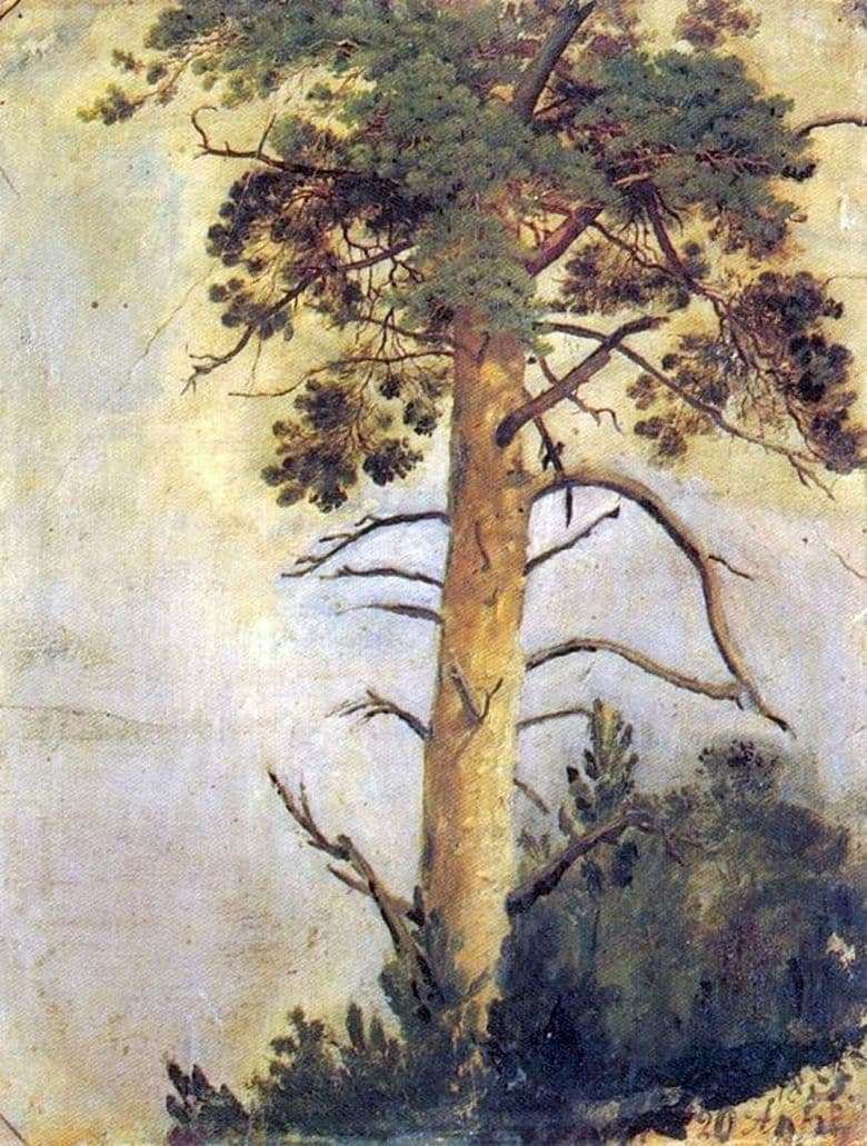 Description of the painting by Ivan Shishkin Pine on the rock